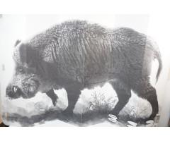 Мишень «Кабан» (1x1,5 м)